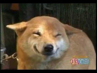 Прикол:собака-улыбака
